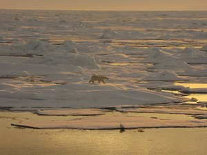 A study has found that the Beaufort sea is acidifying faster than any other ocean. Image credit: Collection of Dr. Pablo Clemente-Colon, NOAA National Ice Center.