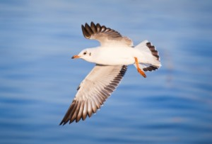 Seabird populations around the world have declined greatly over recent decades, according to new research. Image credit: Witthaya Phonsawat on freedigitalphotos.net